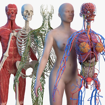 Biomedical Virtual Labs